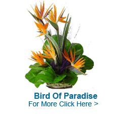 Online Flowers to Hyderabad