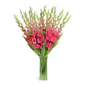 Deliver Christmas Flowers to Hyderabad